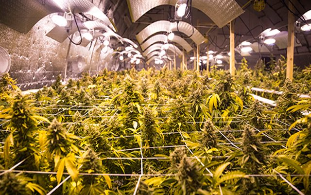 ways-for-cannabis-businesses-to-become-more-environmentally-sustainable
