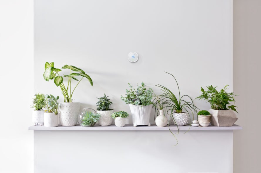 smart thermostat on wall above shelf of plants